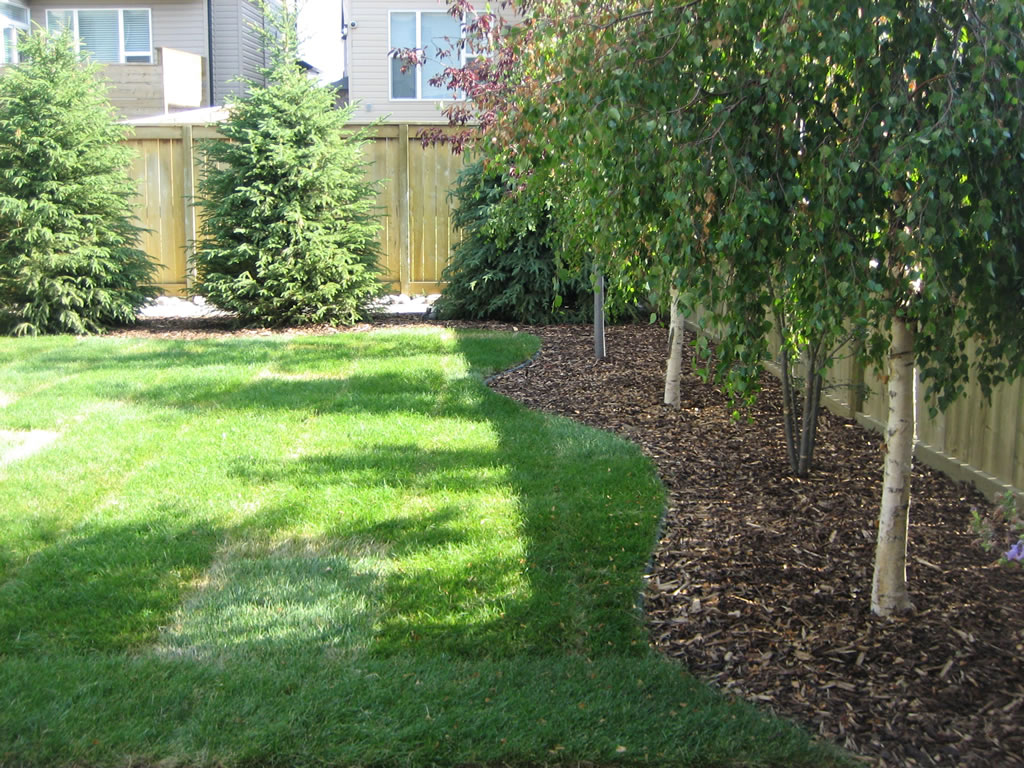 Calgary backyard with trees morgan k landscapes for Great small trees for landscaping