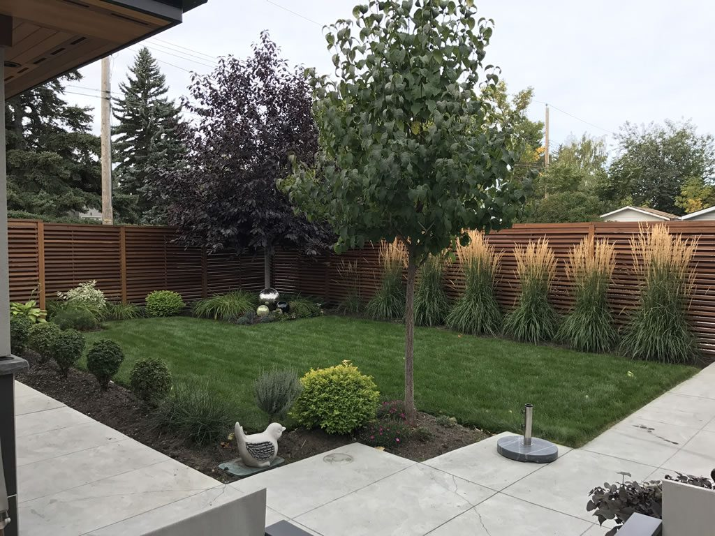 Contemporary back yard - 3 years later