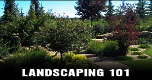 Landscaping 101