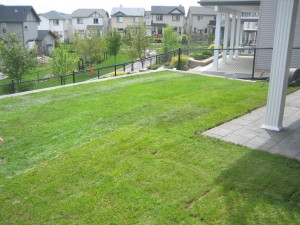 New Sod and Irrigation